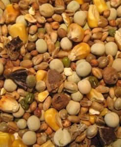 BIG-CARP-Particle-Mix-10Kg-0